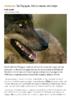Courrier International_05.02.2021_En Espagne, fini la chasse aux loups - application/pdf