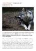 Courrier International_09.05.2019_Loup, y es-tu - application/pdf